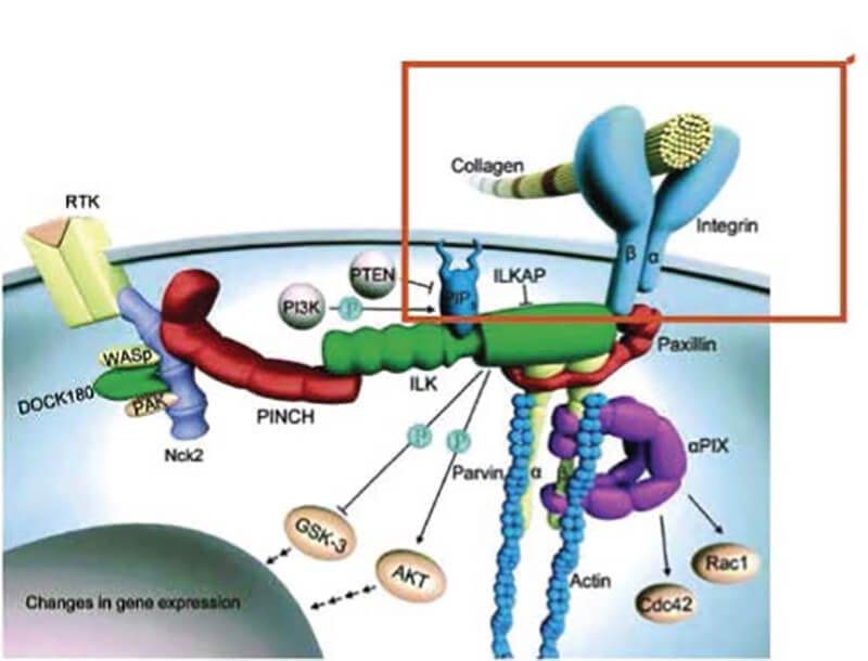 Swissline Cell Shock Age Intelligence De-Aging Restorative Complex