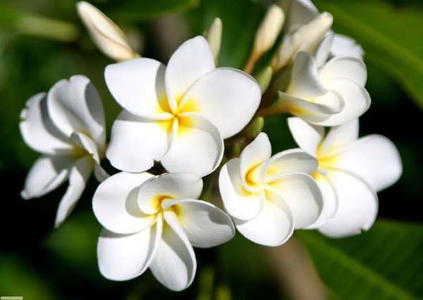 Murad White Brilliance Porcelain Serum