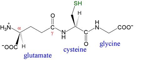 Bạn biết gì về thành phần chất L-Glutathione thường thấy trong mỹ phẩm