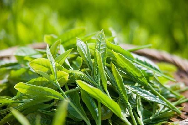 Tinh chất dưỡng ẩm, giảm kích ứng da Image Skincare Vital C Hydrating Anti-Aging Serum