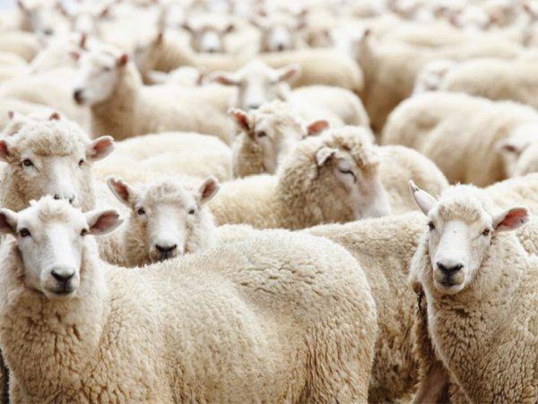 Top 5 sản phẩm nhau thai cừu  được nhiều chị em săn lùng hiện nay