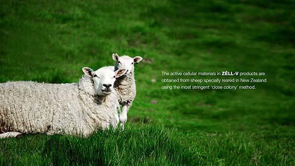 viên uống nhau thai cừu Zell-V 30000mg