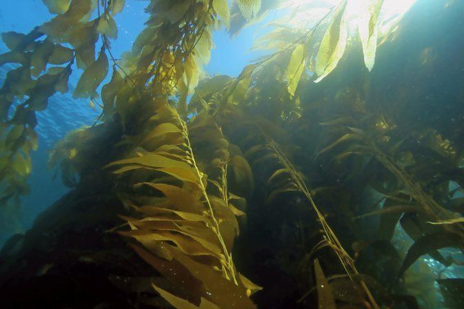 DR SPILLER HYDRO-MARIN CLEANSING FOAM - Sữa rửa mặt tảo biển cho da lão hóa, thiên dầu
