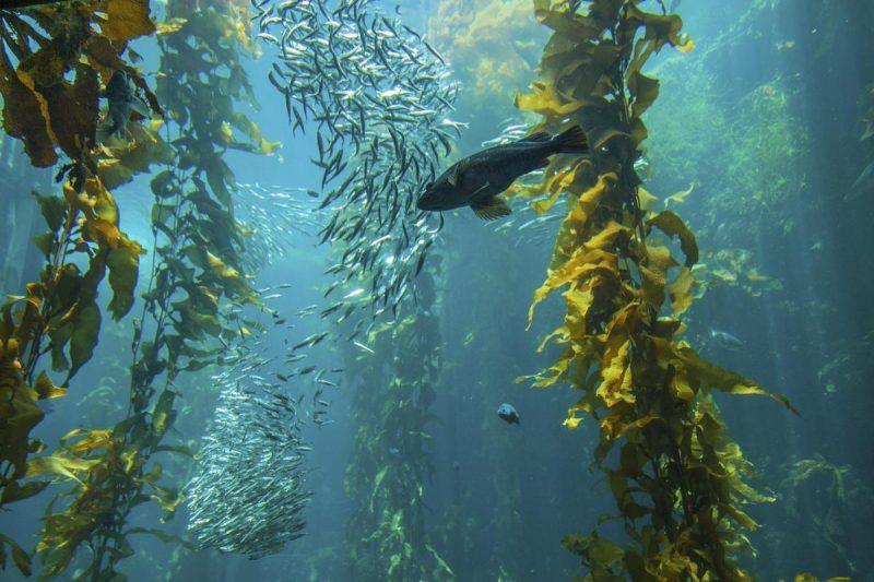 DR SPILLER HYDRO - MARIN FRESHENER – Nước hoa hồng từ biển giàu nguyên tố vi lượng