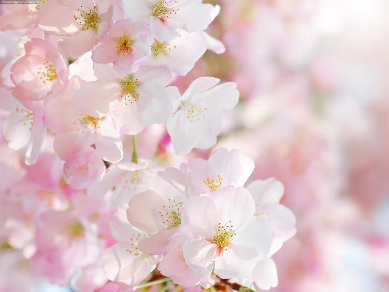 Kem dưỡng trắng da chống lão hóa Carita Beauty Diamond Anti-Ageing Precious Cream