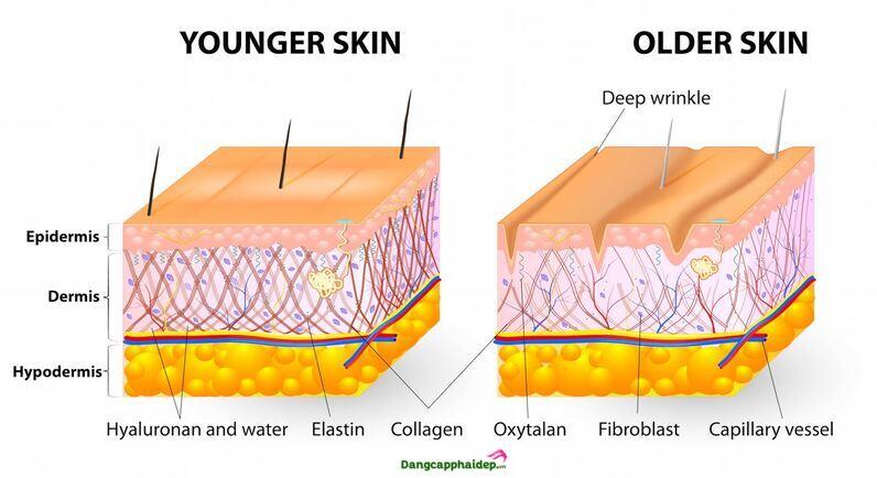 collagen bôi mặt
