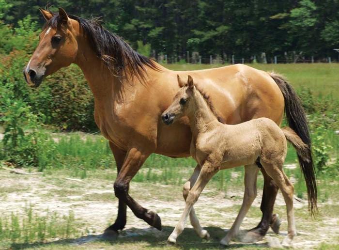 Viên uống nhau thai ngựa Placenta 35000 được ưa chuộng số 1 tại Nhật Bản