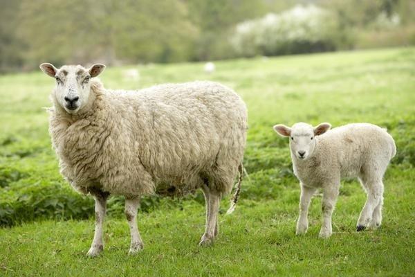Khám phá top 5 sản phẩm nhau thai cừu được ưa chuộng nhất 2018