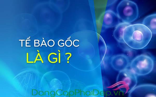 Tìm hiểu rõ khái niệm tế bào gốc là gì?