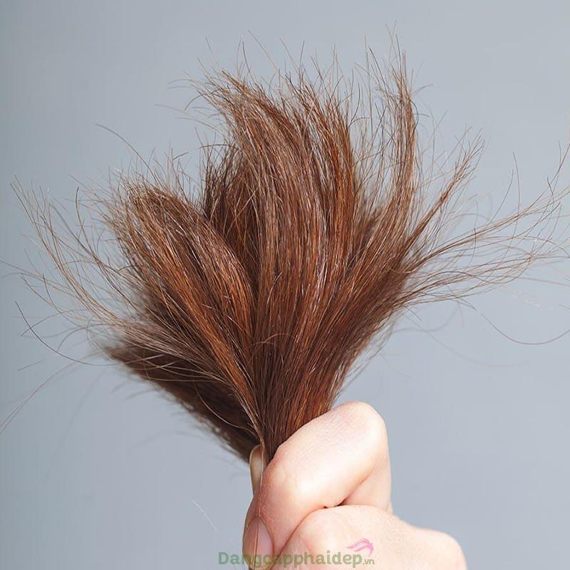 Tóc chẻ ngọn là một trong những dấu hiệu dễ nhận biết mái tóc hư tổn