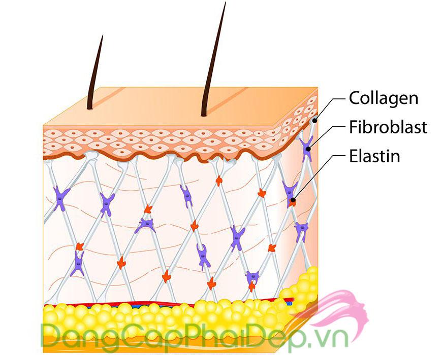 Chú Ý 6 Dấu Hiệu Thiếu Hụt Collagen. Bổ Sung Collagen Như Thế Nào Cho Đúng?