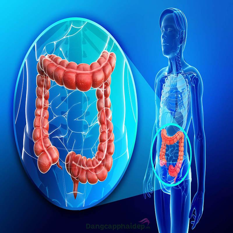 Thải độc cơ thể giúp làm sạch ruột già