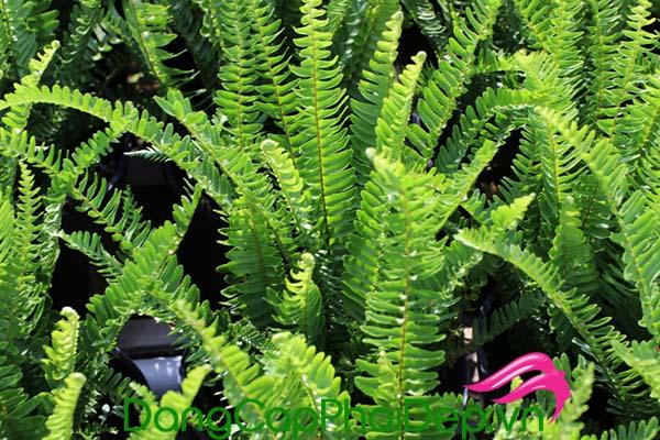Kem chống nắng của Heliocare hầu hết được chiết xuất từ nguồn thiên nhiên lành tính.