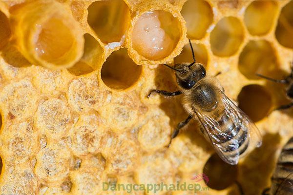 Chứa thành phần sữa ong chúa