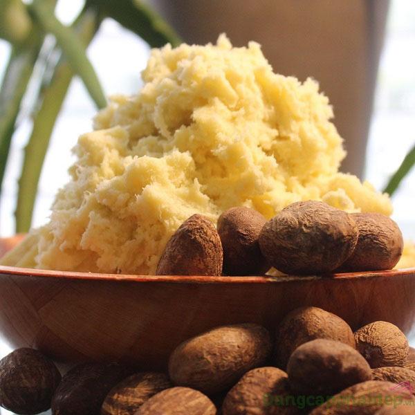Chiết xuất bơ hạt mỡ