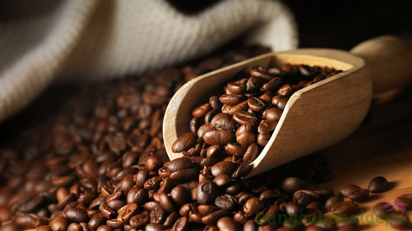 Chiết xuất Caffeine