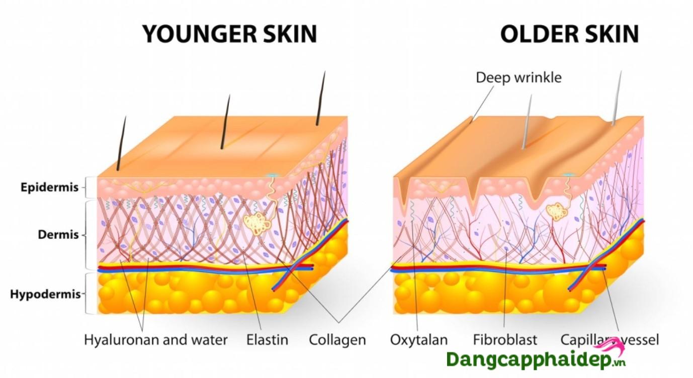 top-4-cong-dung-vuot-troi-cua-kem-bo-sung-collagen
