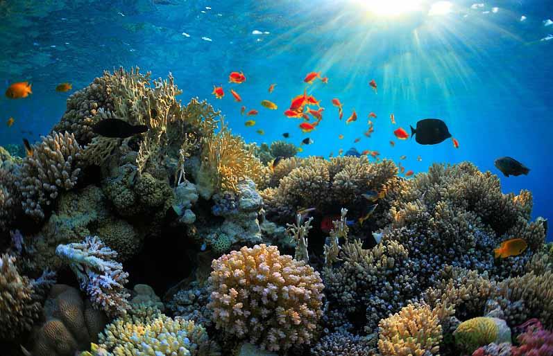 Sản phẩm chứa hợp chất Collagen tươi từ đại dương