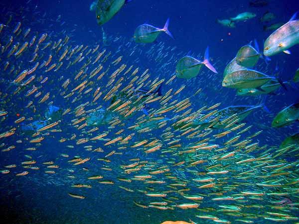 Sản phẩm chứa chiết xuất từ vi sinh vật biển