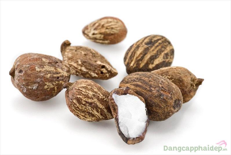 Tăng cường dưỡng ẩm sâu cho da nhờ chiết xuất bơ hạt mỡ
