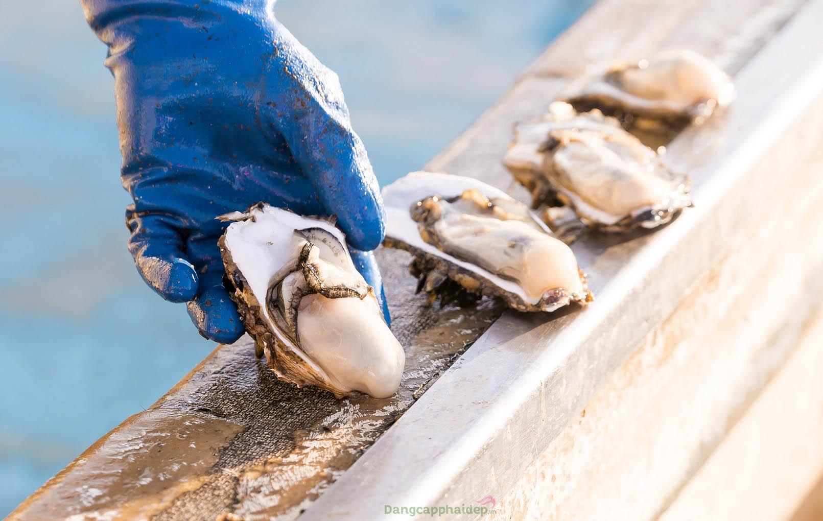 Cảm nhận trọn vẹn hương vị biển cả khi bạn thưởng thức món hàu sống Miyagi