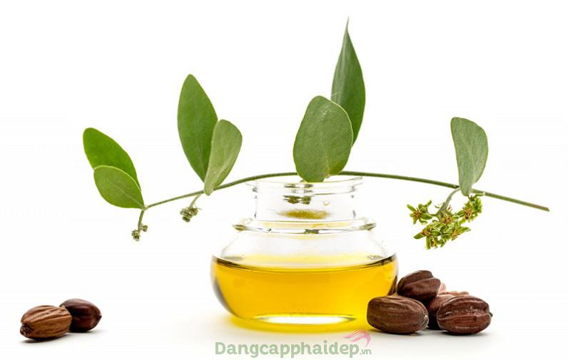 Chiết xuất dầu hạt jojoba