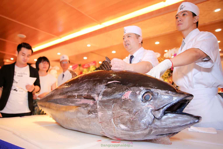Cá ngừ vây xanh Nhật Bản.