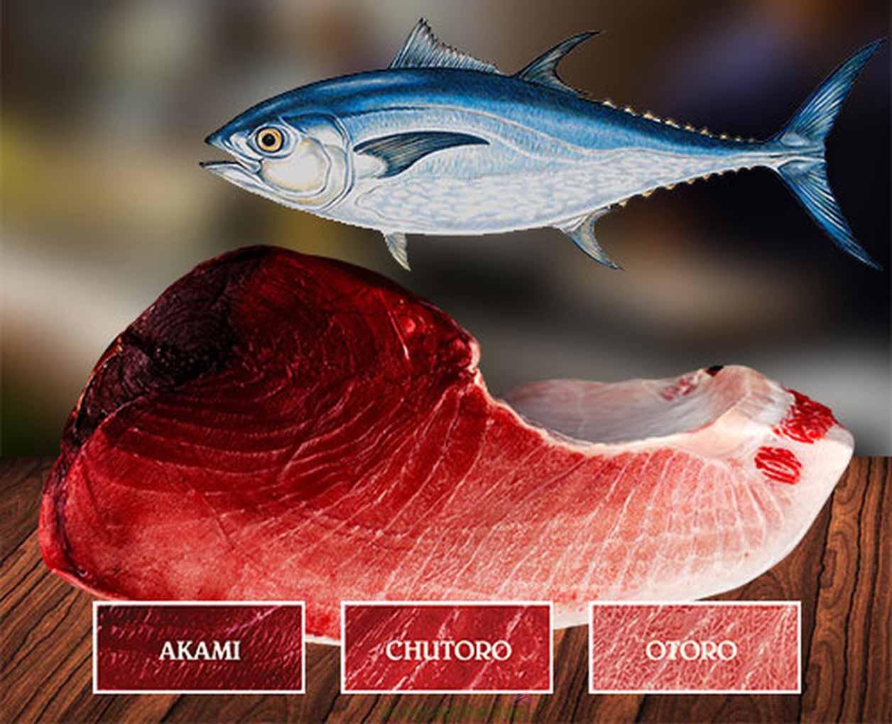 Thịt bụng cá ngừ Nhật Chutoro được xem là phần trung hòa của Akami & Otoro