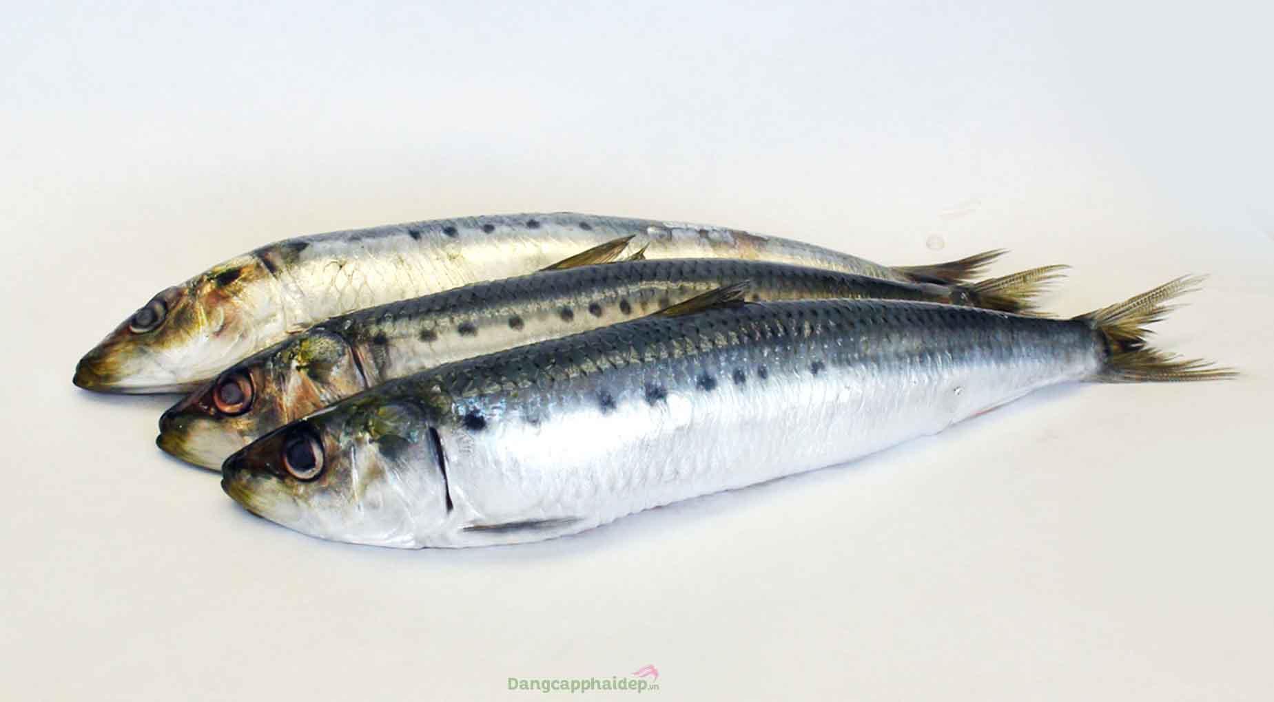Cá mòi Nhật có kích thước nhỏ, thịt chắc và vị mềm ngọt tự nhiên