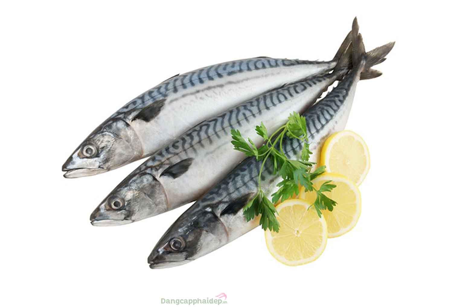 Cá saba (cá thu Nhật) là loại cá quốc dân của Nhật được thế giới ưa chuộng