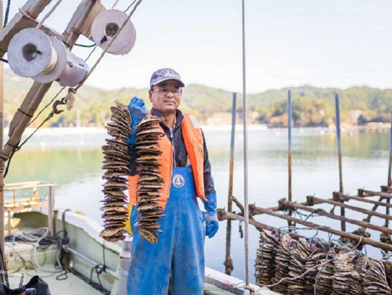 """Sò điệp Nhật đến từ vùng biển Miyagi mệnh danh là """"vua của các loại sò ốc"""" vì những đặc trưng riêng biệt"""
