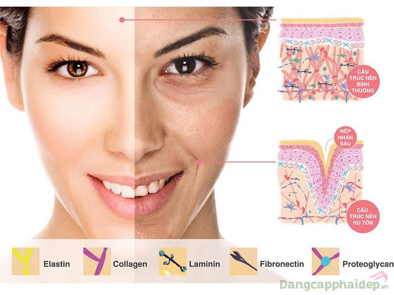 Bước qua độ tuổi 25 làn da sẽ suy giảm dần collagen, gây ra dấu hiệu lão hóa.
