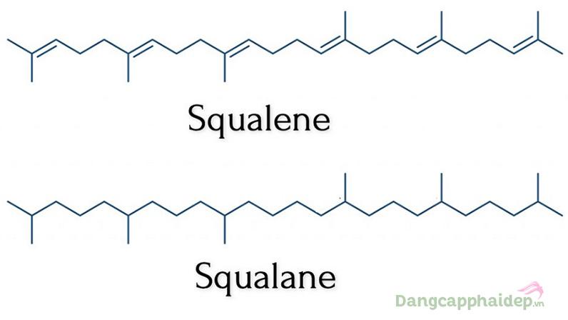 Squalene tăng cường sản xuất collagen, sửa chữa tế bào tổn thương và gốc tự do.