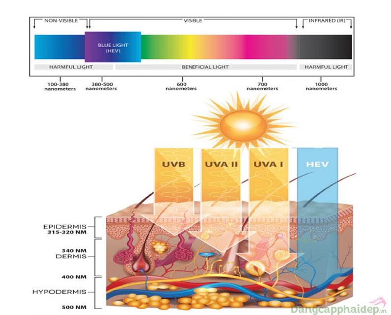 Tia HEV ảnh hưởng sâu đến lớp hạ bì làm tổn thương cấu trúc da.