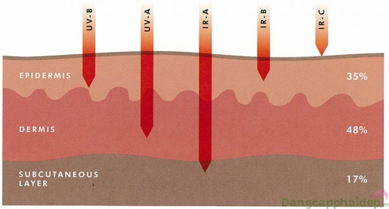 Cũng như HEV tia Ir-a xâm nhập sâu đến lớp hạ bì của da phá hủy collagen và elastin của da.
