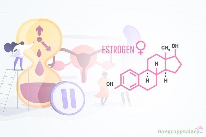 Hormone estrogen chính là nội tiết tố nữ là nhân tố quyết định những đặc trưng của nữ giới.