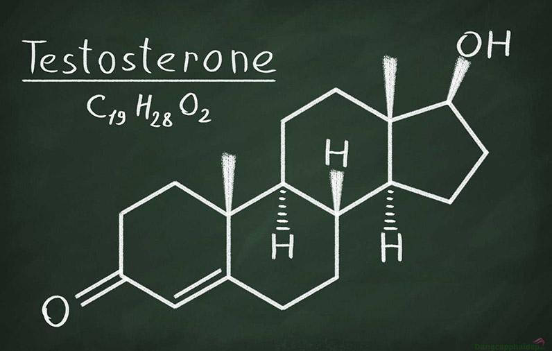 Testosterone là nội tiết tố nam nhưng nữ cũng có một phần để duy trì sức mạnh, giảm chất béo, cơ thể dẻo dai.