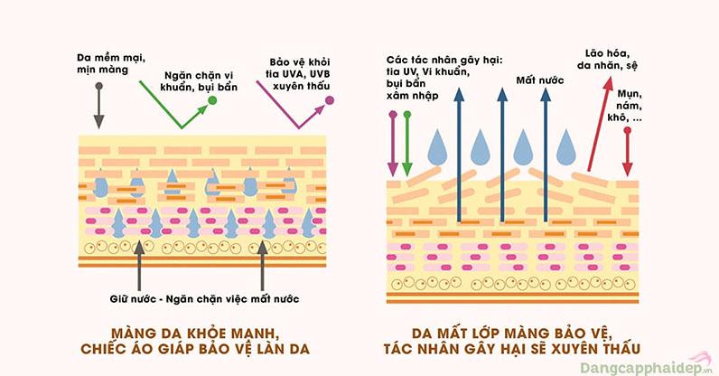 Nhận biết màng da khỏe mạnh và màng da bị mất hàng rào bảo vệ