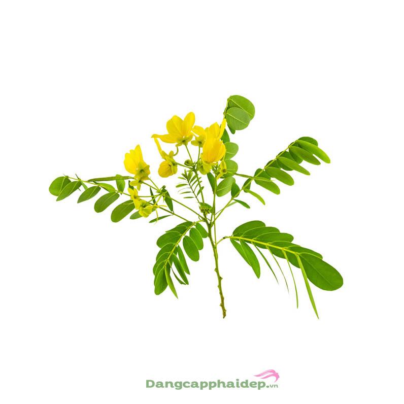 thành phần chăm sóc da từ thực vật