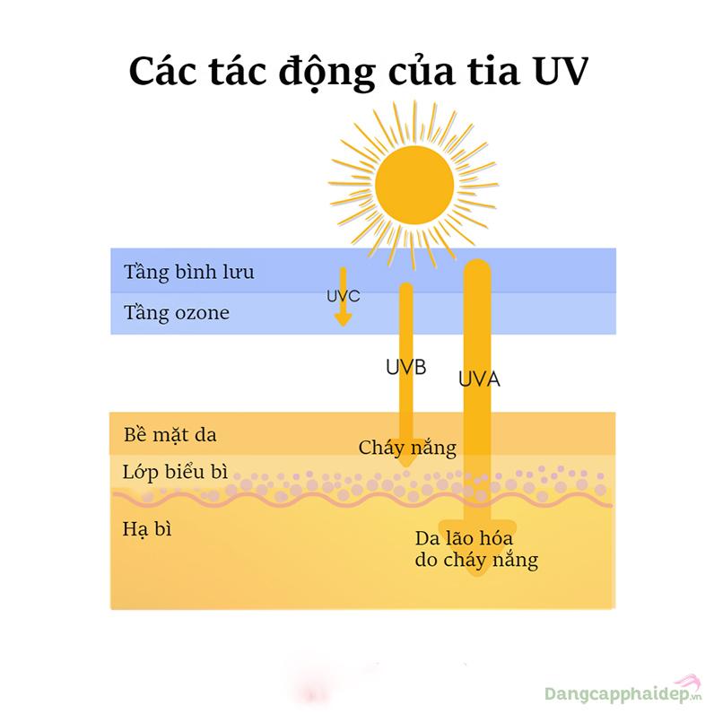 Các tác động của tia UV đến da.