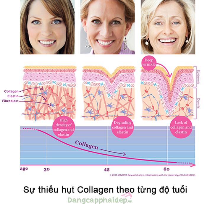 Độ tuổi càng cao collagen càng giảm.