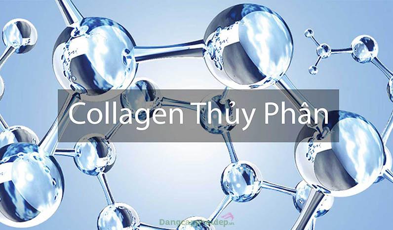 Collagen tăng cường sự đàn hồi cho da, ngăn chặn quá trình lão hóa trên da.