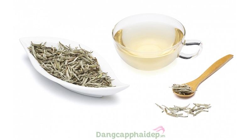 Chiết xuất trà trắng