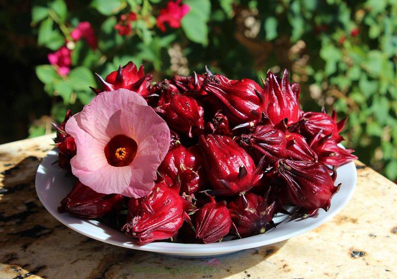 Chiết xuất hoa bụp giấm hay còn gọi là atiso đỏ.