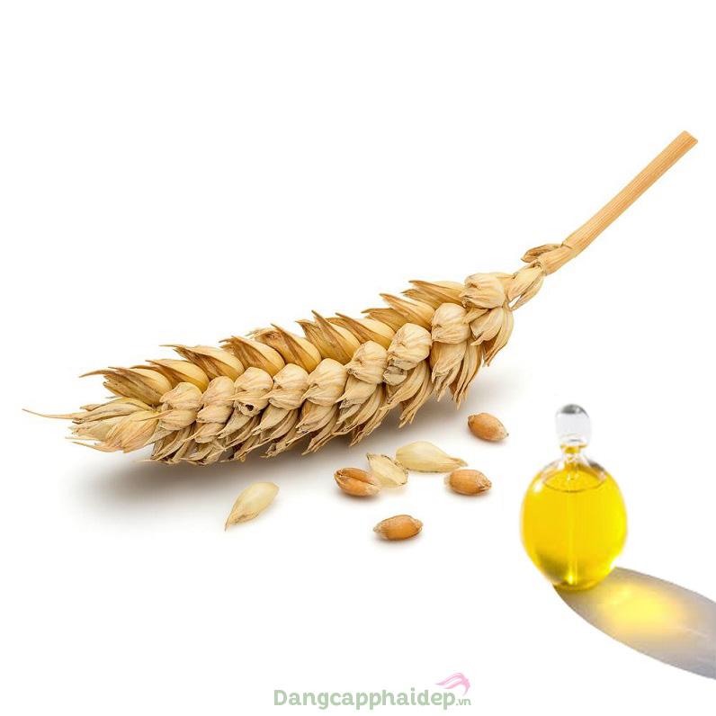 Dầu mầm lúa mì