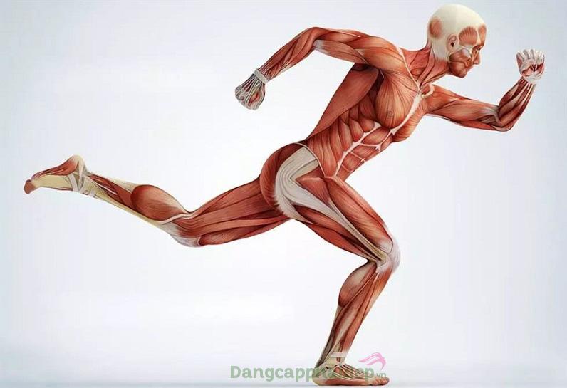 Collagen đảm nhận nhiều vai trò quan trọng đối với cơ thể, sức khỏe