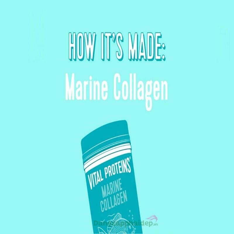 Marine collagen là gì