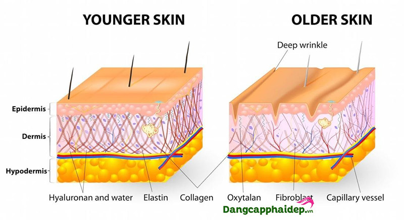 Tìm hiểu Hydrolyzed collagen là gì?