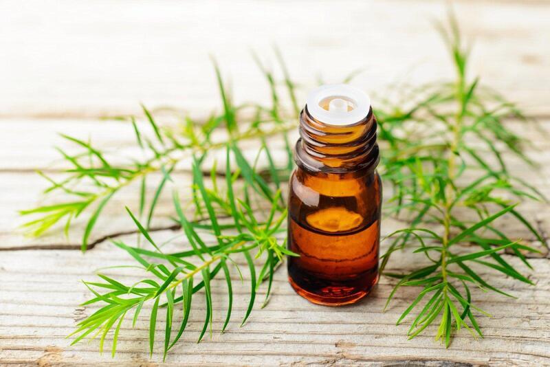 Tea tree oil là tinh chất trị mụn hiệu quả và lành tính nhất.
